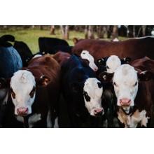 Curso de Operaciones auxiliares en el cuidado, transporte y manejo de animales con créditos universitarios