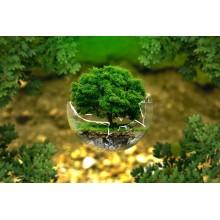 Curso de Normativa y política interna de gestión ambiental de la organización a distancia