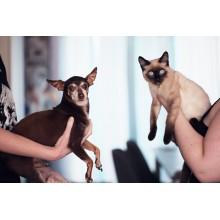 Curso de Dermatología clínica en perros y gatos a distancia
