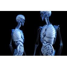 Curso de Anatomía Humana a distancia