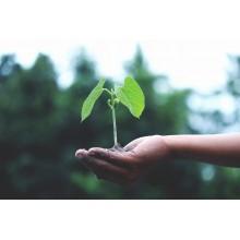 Curso de Aplicación de métodos de control fitosanitarios en plantas, suelo e instalaciones a distancia