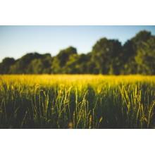 Curso de Transporte y almacenamiento de cultivos herbáceos a distancia