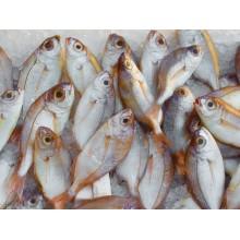 Curso de Elaboración de congelados de productos de la pesca a distancia