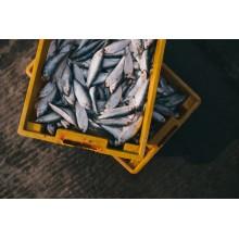 Curso de Recepción, almacenaje y expedición de productos de la pesca a distancia