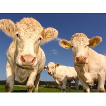 Curso de Control de incorporación y sanitario de los animales de recría y cebo online