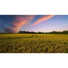 Curso de El suelo de cultivo y las condiciones climáticas online