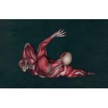 Curso de Bases anatómicas y funcionales de los principales órganos, aparatos y sistemas del cuerpo humano para certificado