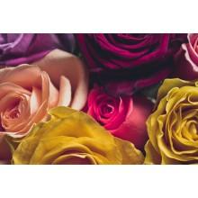 Curso de Trabajos auxiliares en la elaboración de composiciones con flores y plantas para certificado