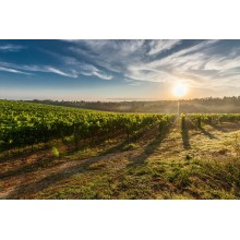 Curso de El suelo de cultivo y las condiciones climáticas para certificado