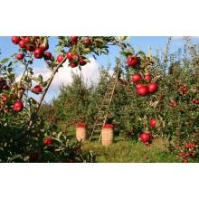 Curso de Acondicionamiento del terreno o medio de cultivo en actividades agricolas para certificado