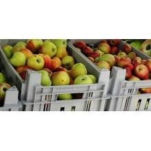 Curso de Almacenamiento y acondicionamiento de la fruta en campo para certificado