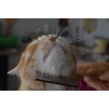 Curso de Higiene, cuidados básicos y peluquería canina y felinaa distancia con prácticas